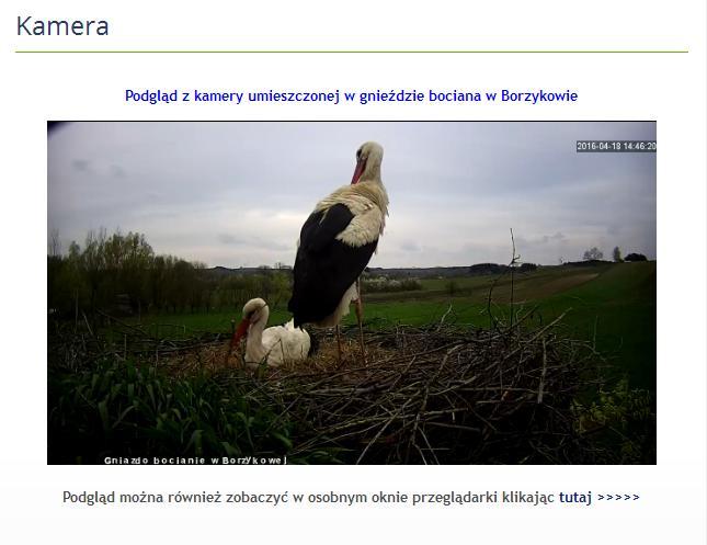 - bociany_w_borzykowie.jpg